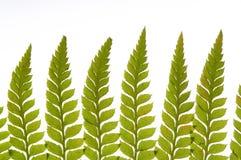 Detail of green fern. Fractal design of nature Stock Photos