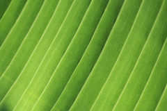 Detail green leaf. Leaf nature detail closeup background abstract green Stock Image