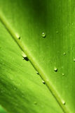 Detail green leaf Royalty Free Stock Photo