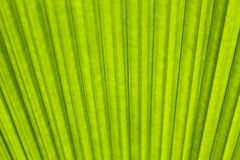 Green leaf as background Royalty Free Stock Photos
