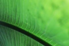 Detail green leaf Stock Photo