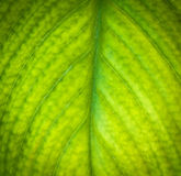 Detail of a leaf. Stock Images