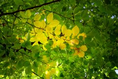 Detail of green leaves in autumn forest stock photo