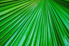 Green palm leaf textures Royalty Free Stock Photo