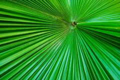 Green palm leaf textures Stock Photography