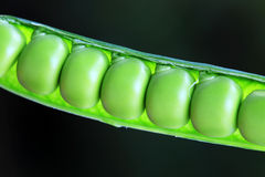 Detail of the green Peas Stock Image