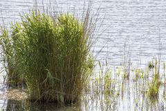 Detail of green plant in a lake Stock Photos