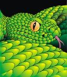 Detail of green snake Stock Photos