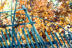 Detail of grunge wild fence with golden leaves Stock Photo
