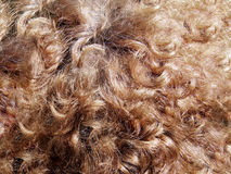 Detail hair Royalty Free Stock Image