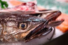 Detail on hake head fish on market. Hake fish species to be sold exposed on a fish market in the Spanish island of Mallorca stock photography