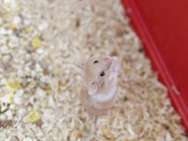 detail of hamster in a cage, close-up Stock Images