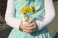 Detail of hand´s child with bunch of wild flowers Royalty Free Stock Images