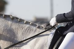 Detail of the hands and braids of a binomial in dressage. In Jerez stock photography
