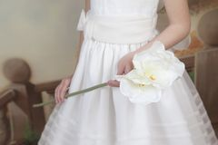 Detail of the hands of a communion girl. Dressed in white with a flower in her hands Royalty Free Stock Images