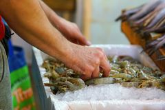 Detail of hands of fishmonger putting shrimps on display for sale in the central market of Athens royalty free stock photo