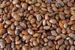 Detail of haricot beans. Detail of brown haricot beans Stock Photos