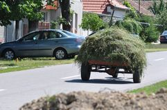 Hay on a tow. Detail of hay on a tow Royalty Free Stock Image