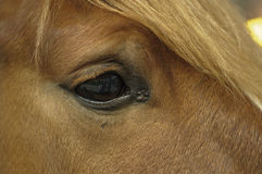 Detail of the head of a horse Stock Photos