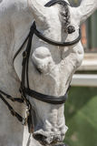 Detail of the head of a purebred Spanish horse Royalty Free Stock Photography