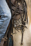 Detail of an headstall Stock Images