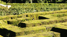 Detail hedges labyrinth Royalty Free Stock Photography