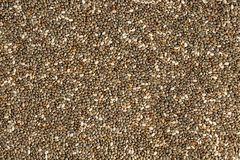 Detail high resolution closeup photo of chia seeds Salvia hispa stock photo