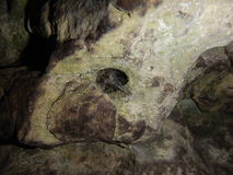 Detail of a hole in a rock wit spider web Stock Image