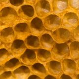 Detail of honey comb showing empty cells. Hexagonal structure within bee hive of European honey bee & x28;Apis mellifera& x29;, in the family Apidae royalty free stock photography