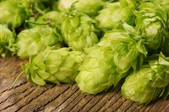 Detail of Hop Cones Stock Photography