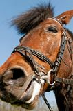 Detail of a Horse Royalty Free Stock Images