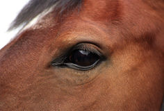 Detail of an horse Royalty Free Stock Photo