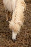 Detail of a horse`s mane.  stock images