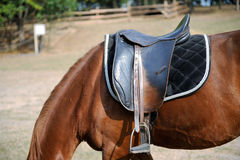 Detail of a horse saddle Stock Images