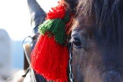 Detail Of Horses Head Royalty Free Stock Photos