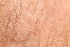 detail of human skin with hair Stock Photos