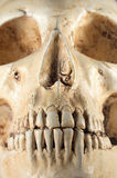 Detail of human skull Royalty Free Stock Photography