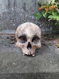 Detail of a human skull in a cemetery Stock Image