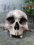 Detail of a human skull in a cemetery Royalty Free Stock Photo