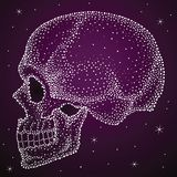 Detail Human Skull side view Stock Photography