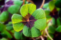 Detail Image of lucky clover royalty free stock photography