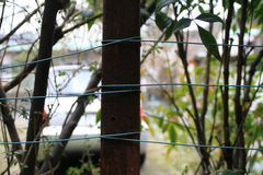 Detail of improvised fence with blue cable and wooden poles Royalty Free Stock Images
