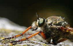 Detail of insect fly. Macro portrait. Extreme macro portrait. Detail of insect fly Stock Photography