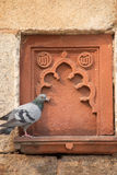 Detail of Isa Khan Niyazi tomb decoration with a sitting pigeon, Royalty Free Stock Image