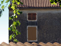 Detail in Istria. Traditional roof in Bale, Istria, Croatia with branch of grape vine royalty free stock photo