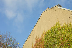 Detail of ivy plant climbing on a facade house outdoors on a sun Royalty Free Stock Photography