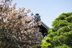 Detail on Japanese temple roof against blue sky during cherry blossom season Royalty Free Stock Image