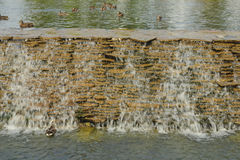 Detail of the lake in the park Stock Images