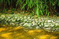 Detail of the lakes in the Japanese garden. A detail of a lake in the Japanese garden where you can see that the lake with stones and there is a plant babus Royalty Free Stock Photo