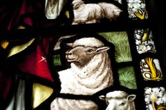 Detail of a lamb in a stained glass window in Crowland Abbey, Cr. Owland, Lincolnshire, England - 27th April 2013 Royalty Free Stock Image
